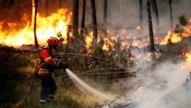 Photo of حرائق تلتهم 1200 شجرة في جنين