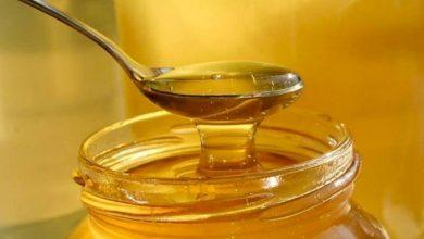"""Photo of """"الزراعة بغزة"""": تقرر منع استراد عسل النحل الى قطاع غزة"""