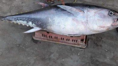 Photo of ما لا تعرفه عن أسرار سمك التونة