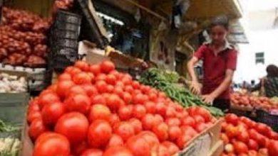 Photo of وزارة الزراعة بغزة: أسعار الطماطم بدأت بالانخفاض